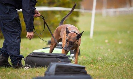 addestratore e cane durante addestramento