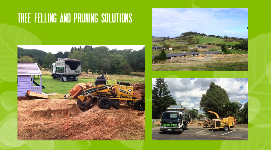 Professional tree & hedge  maintenance and removal  Auckland wide