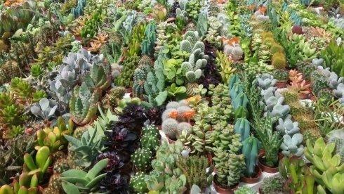 piante per esterni