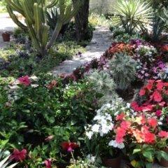 Giardinaggio Olbia