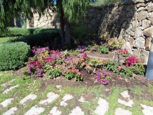 Realizzazione di giardini a Porto Rotondo