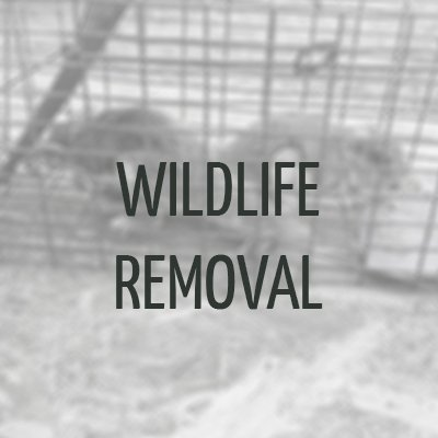Wildlife Removal Raleigh, NC