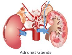 Adrenal Gland Disorder Remedy
