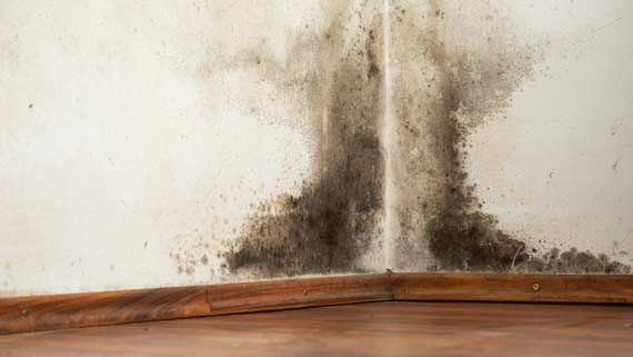Mold Infection Remedies in NYC - Dr. Louis Granirer Holistic Chiropractor