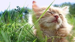 a cat closing its eyes