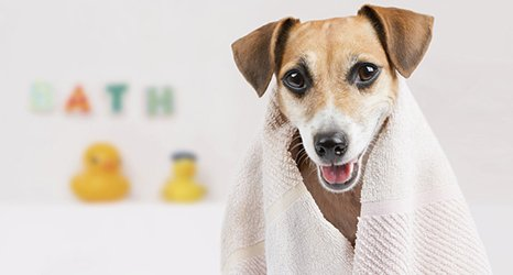 Quality pet grooming in sussex our pet grooming services includes solutioingenieria Choice Image