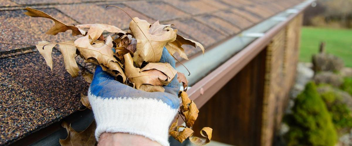 Clearing leaves for gutter maintenance in Perth