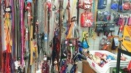 accessori per acquari, accessori per animali, acquariologia
