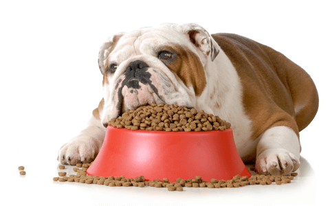 Alimenti per cani sovrappeso