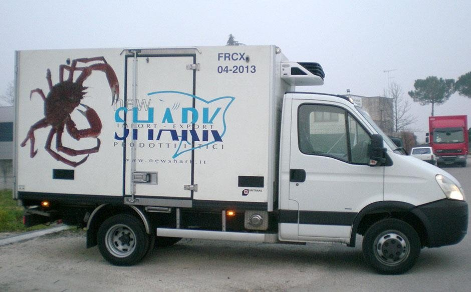 NEW SHARK - GRANSEOLA