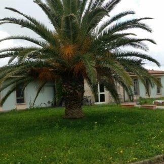 grande albero in giardino  della casa di cura