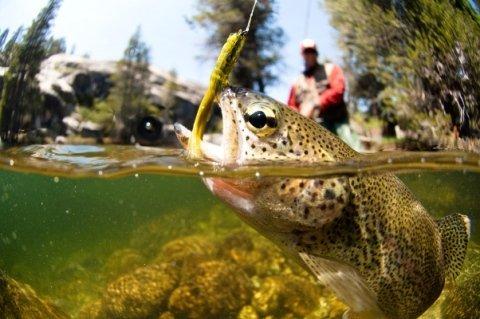 articoli pesca sportiva