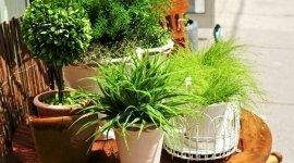 piante da appartamento, piante da esterno
