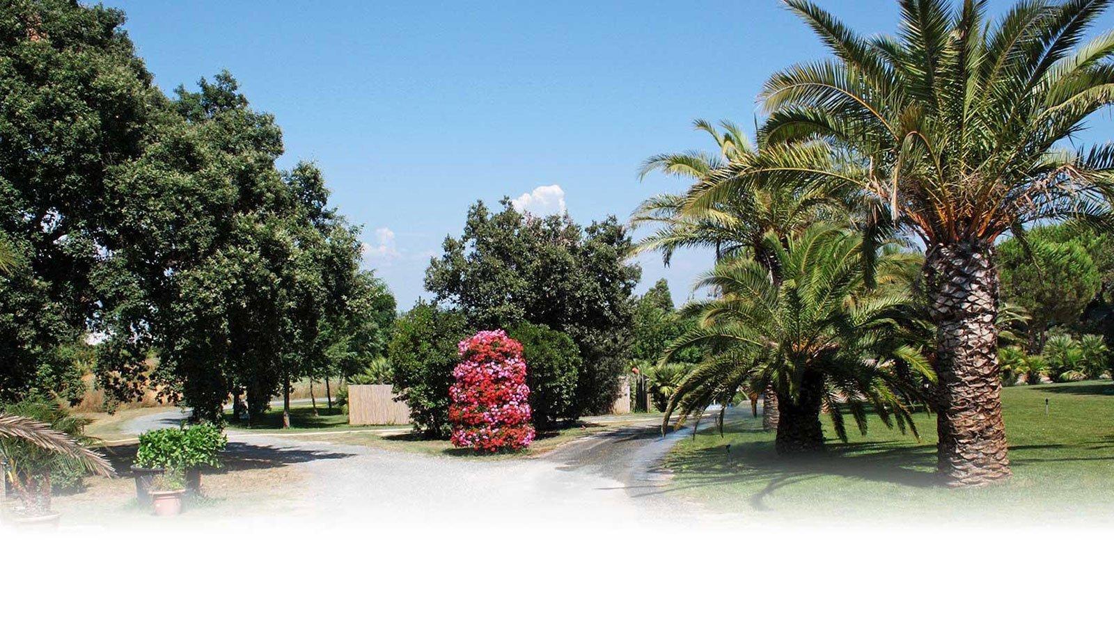 delle palme e degli alberi