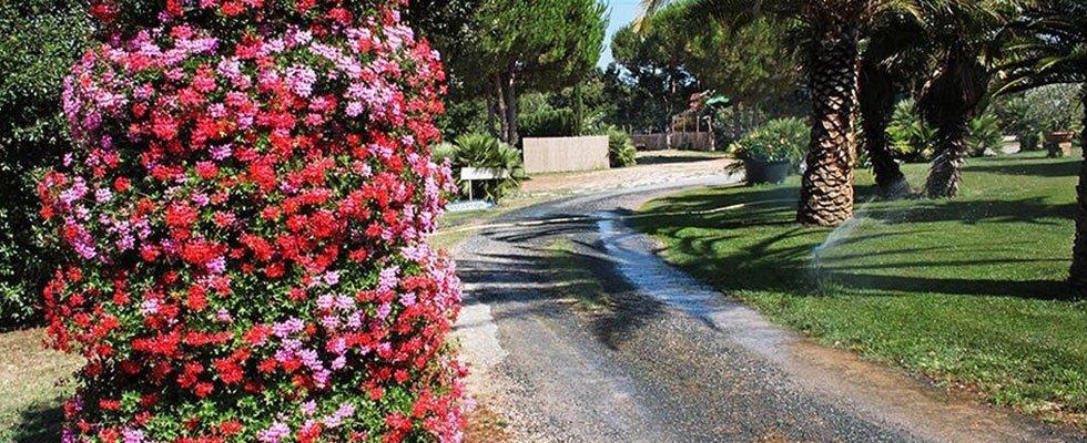 i fiori di color rosso e rosa, una strada e delle Palme