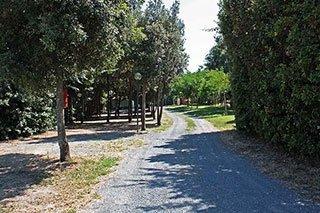 una strada e degli alberi