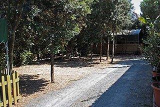 degli alberi e una strada