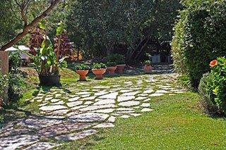 un giardino con cespugli alberi e piante