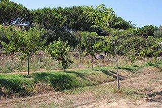 una serie di alberi