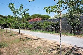 una strada con degli alberi