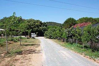 una strada alberata e una serra