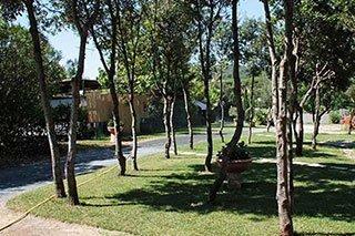 una strada e un prato con degli alberi