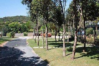 una strada, un prato con degli alberi e vista delle colline