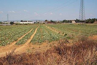 un terreno e della vegetazione arida