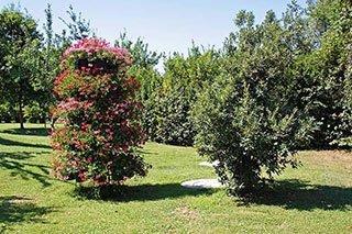 dei fiori rosa e altri alberi