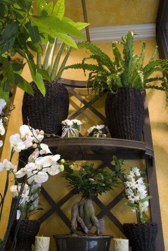 piante e bonsai