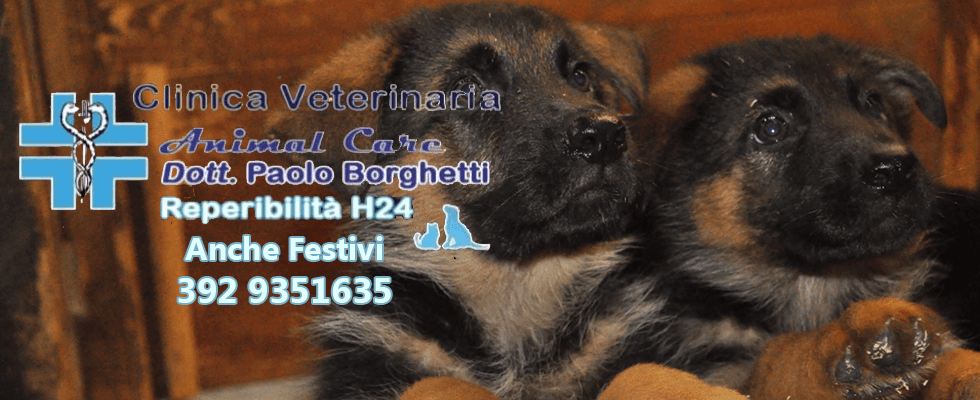 clinica veterinaria animal care