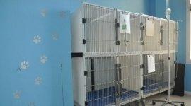 ricoveri post-operatori, degenza animali, sterilizzazioni