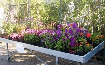 arredo giardino e giardinaggio