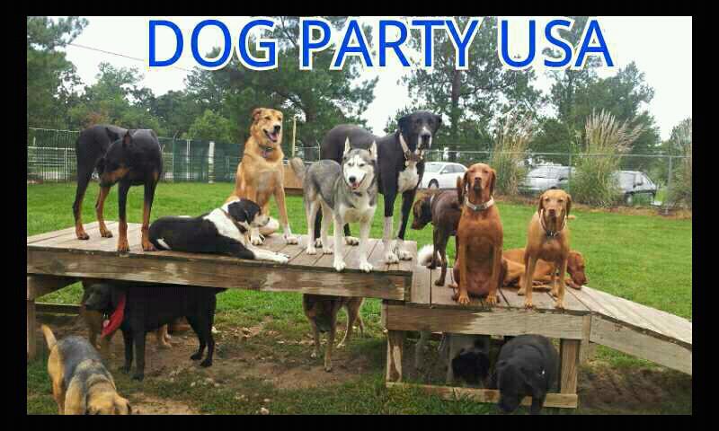 Dog Training Northwest Arkansas
