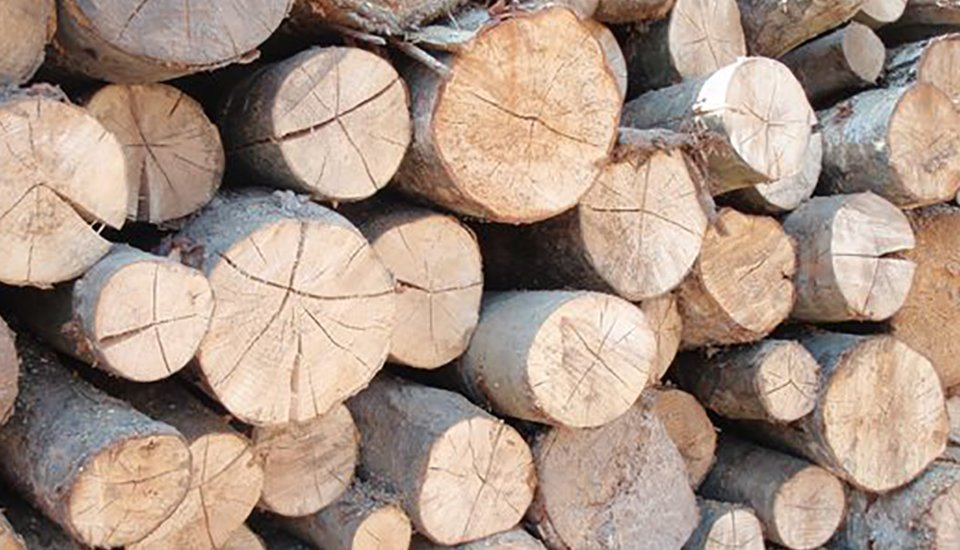 Supplier of Logs