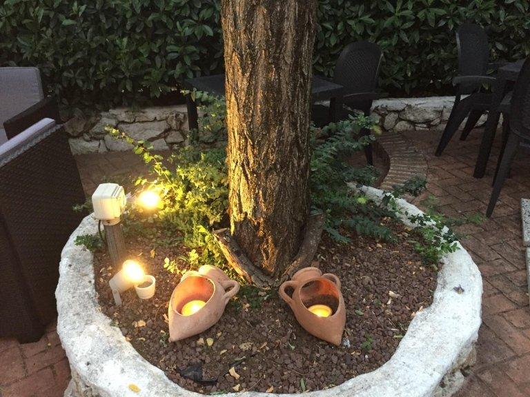 dettaglio tronco di albero con illuminazione in giardino