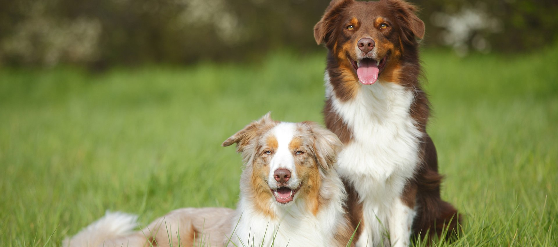 two beaitiful dogs