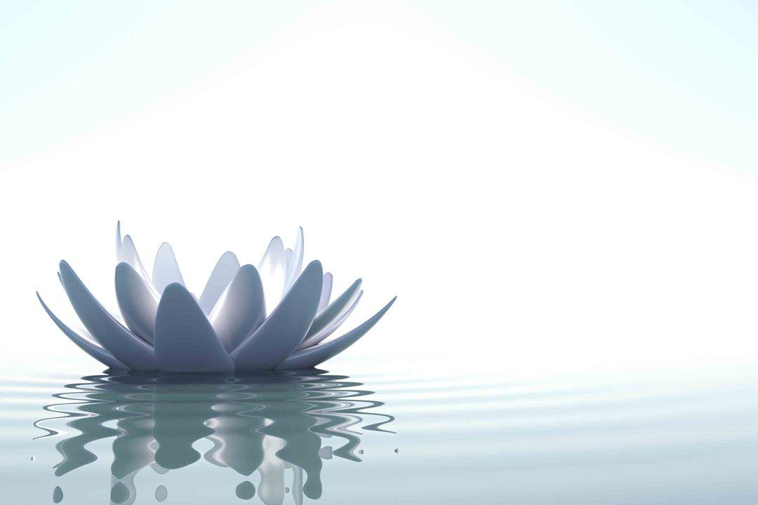 flower floating on pond