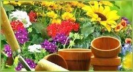vendita al dettaglio piante