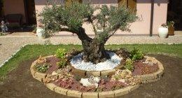 progettazione giardini, realizzazione giardini, aree verdi