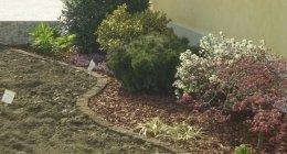 giardino roccioso, piante ornamentali, piante di olive