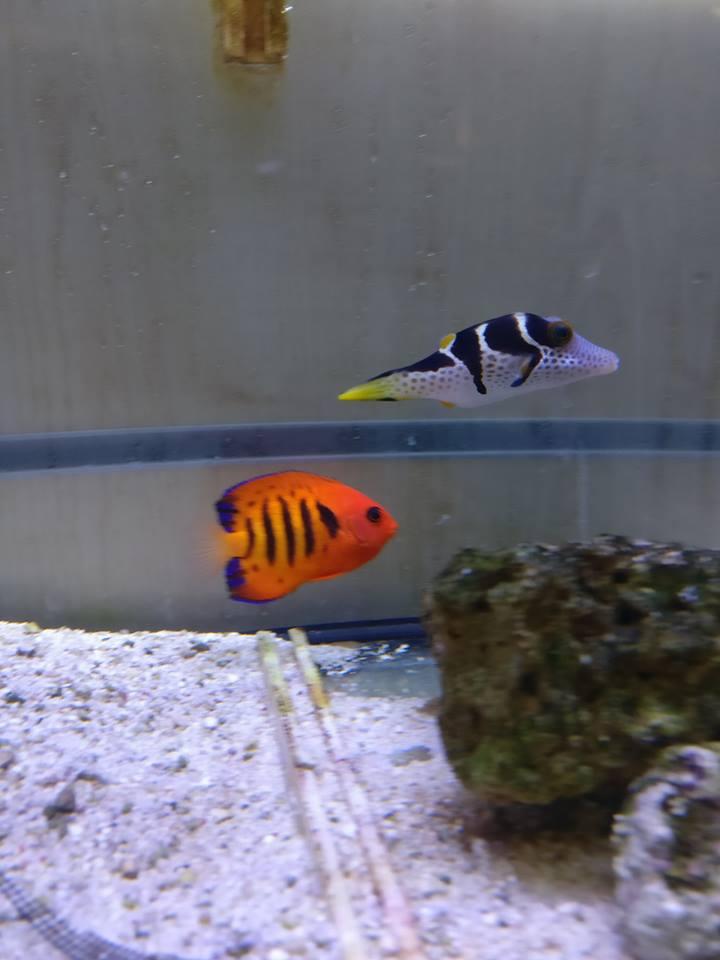 Piccoli pesci colorati