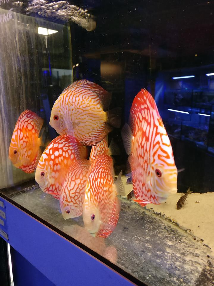 Pesci tropicali di acqua salata
