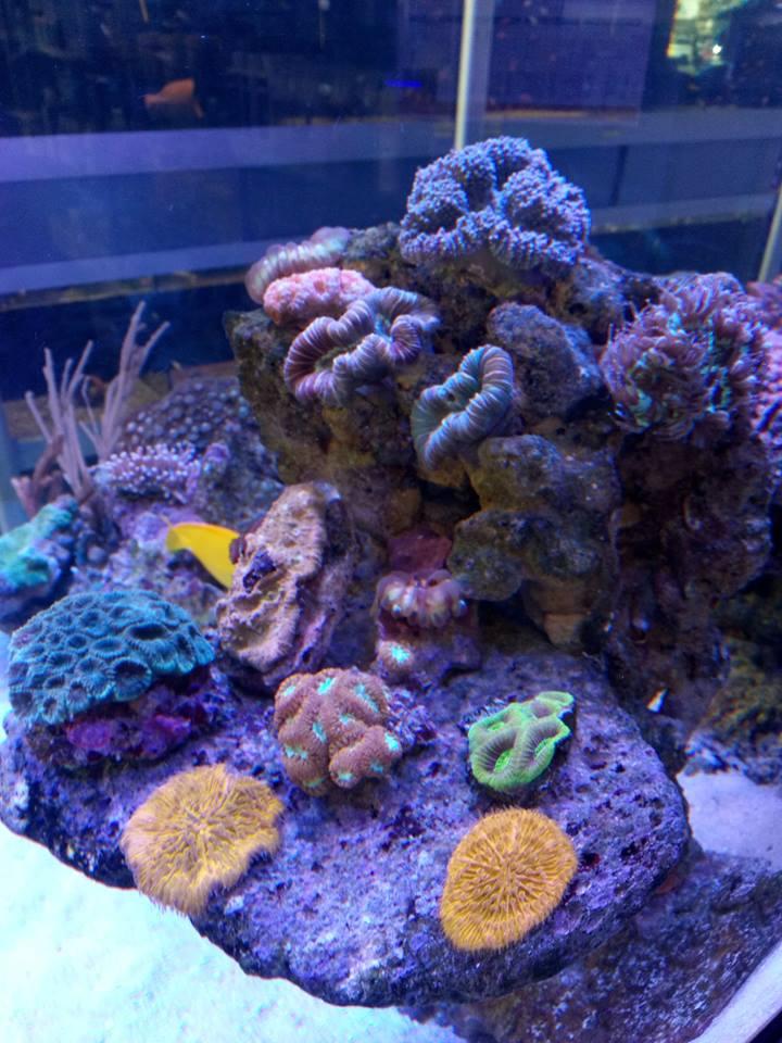 Piccolo arrecife di corallo