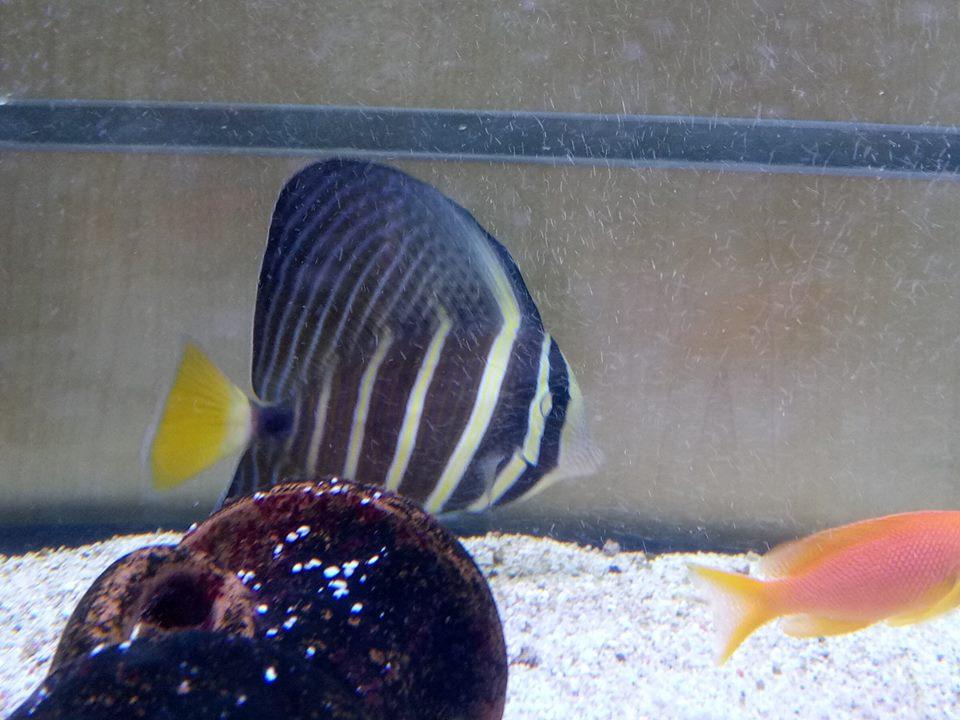 Pesci di acqua salata