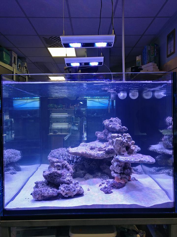 Acquario con imitacion della barriera corallina