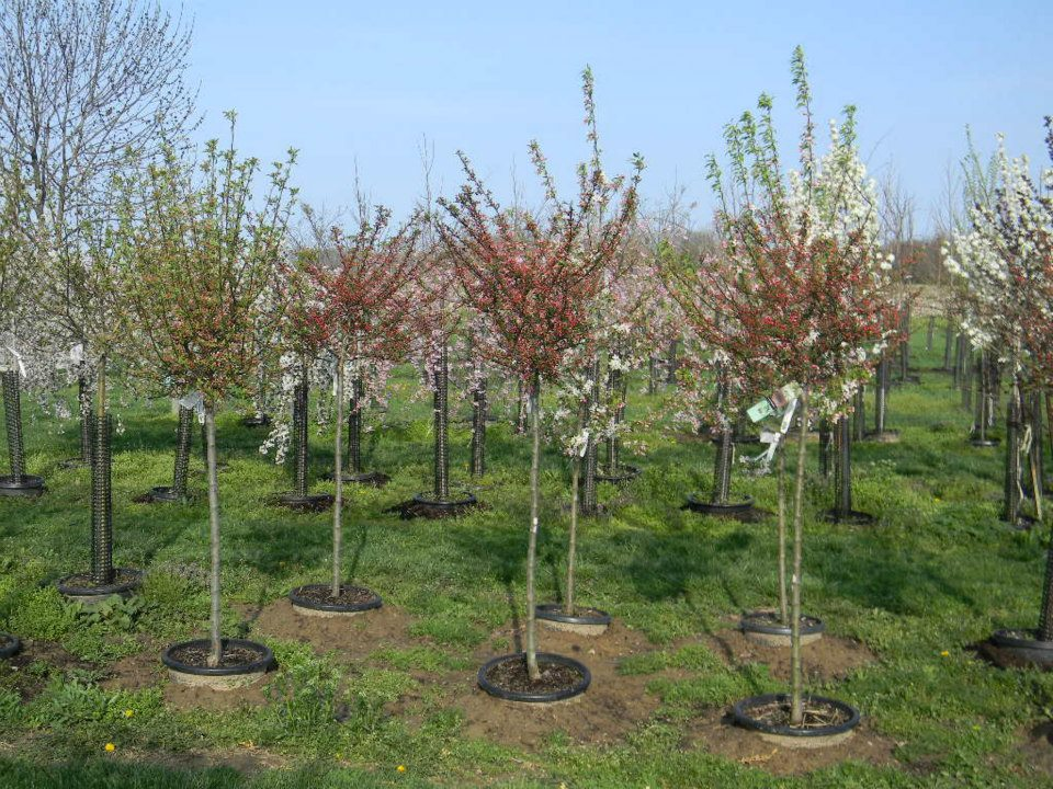 trees shrubs plants