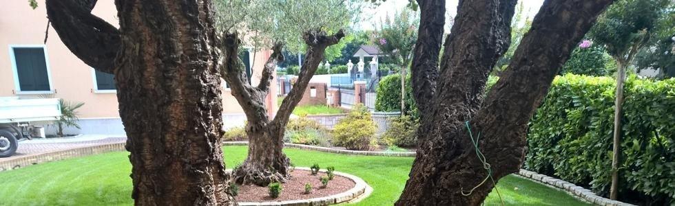 Realizzazione giardini Cittadella