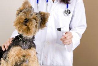 cane con un veterinario
