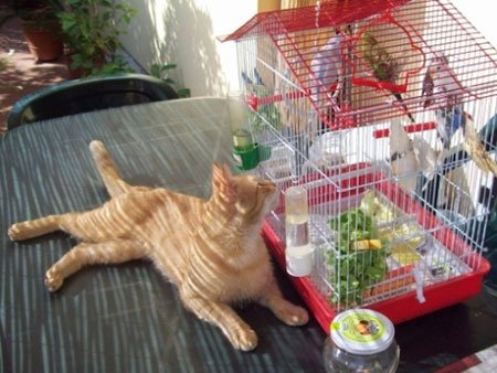 gatto vicino gabbia per uccelli